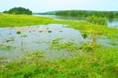 Здесь в травке чистая вода.