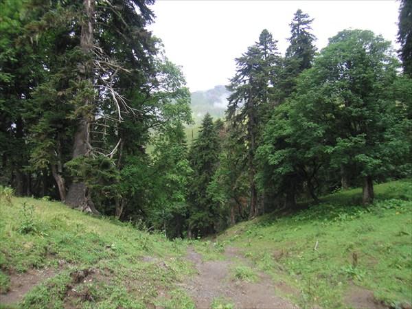 Спуск в дремучем лесу