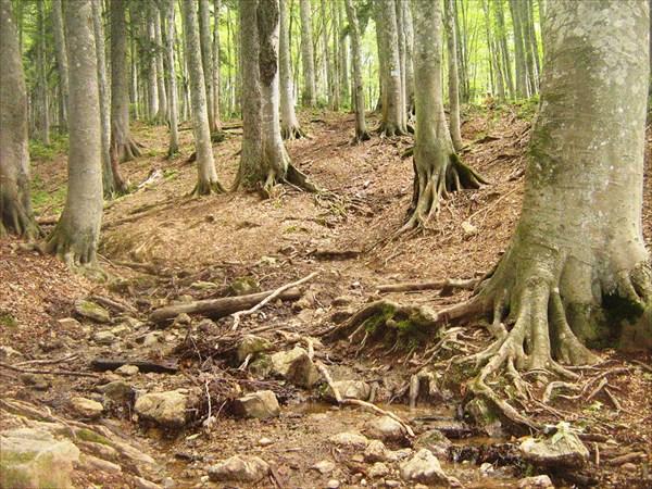 Потрясающий лес!!