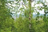 Вид с горы Воттоваара
