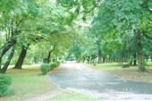 Утро в парке Неплугот