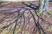 Калининградские деревья на набережной Преголи