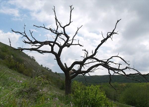 Смешанное редколесье