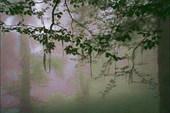 тина на деревьях