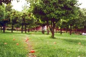 Сады Марракеша