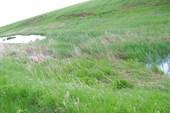 толе речка толе болота.