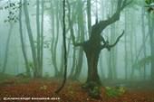 Буковый лес во время дождя