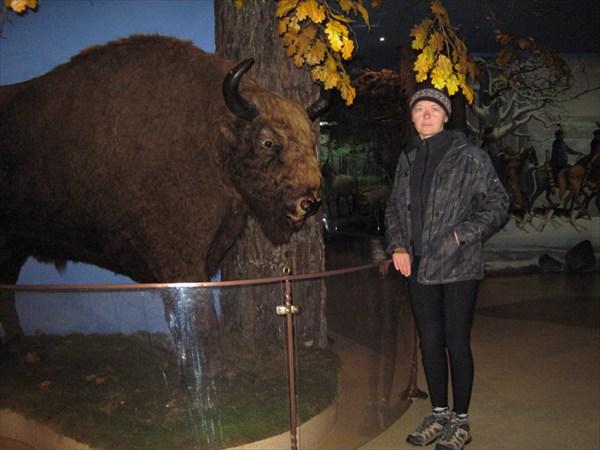 Зубр в Доме природы на территории Беловежской пущи