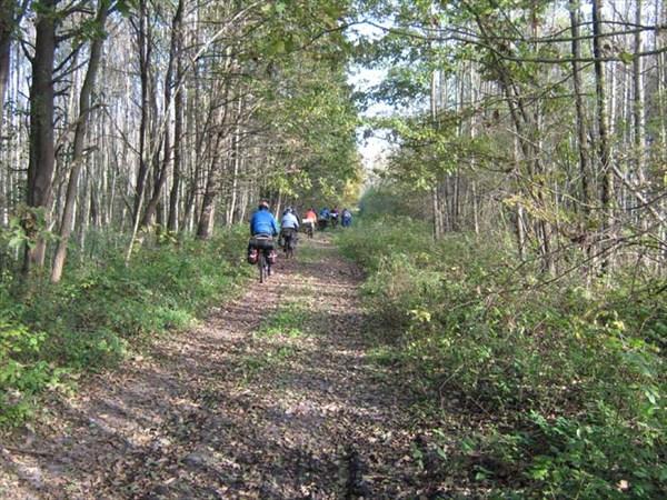 Дорога уже по нашему лесу