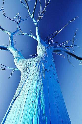 Bluetree5