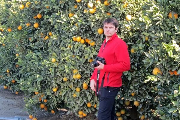 В апельсинах