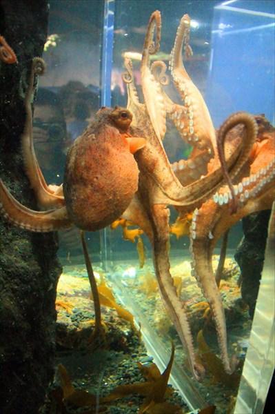 Очень дружелюбный осьминог