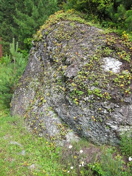 Цветущий камень