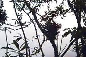 джунгли на склонах Пулулахуа