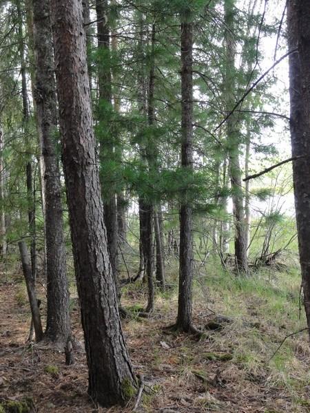 Лес на обрыве.