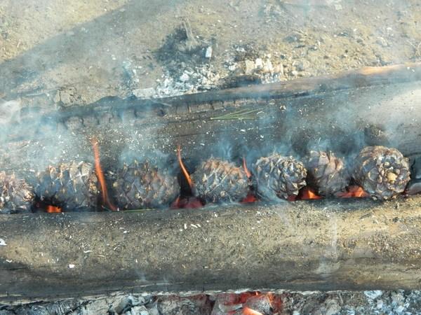 Обжиг кедровых шишек.