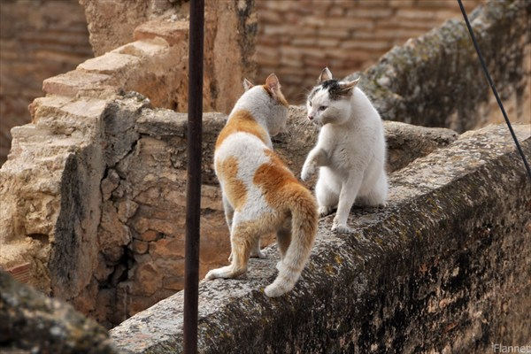 Боевые котики