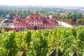 Виноградник Святой Клары
