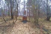 Полуленин средь леса