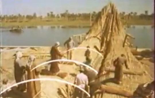 Tigris18