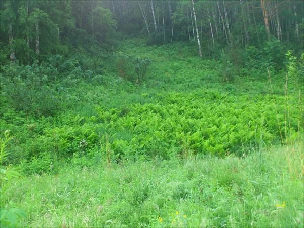Буйство зелени поверх камней в долине Кии