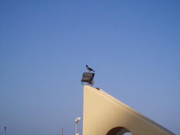 013-Ворона
