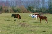 лошади в шубах