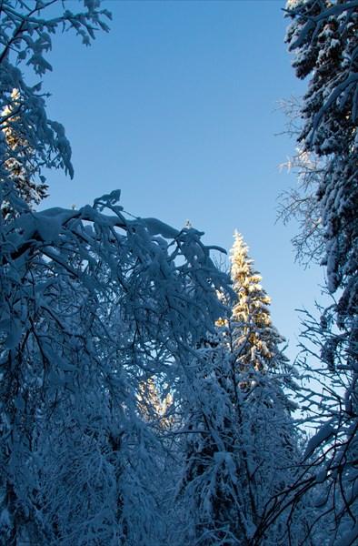 Новогодние деревья, -30. В Москве в это время шел дождь..