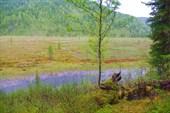 Долина реки Арча