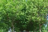 Центральный парк, Кострома