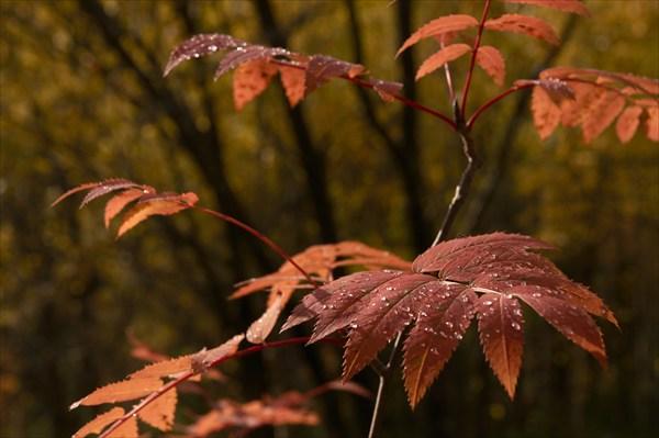Последние краски уходящей осени.