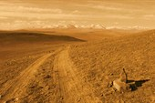 Просторы Монголии