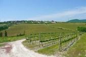Дорога через виноградники на Федотовку