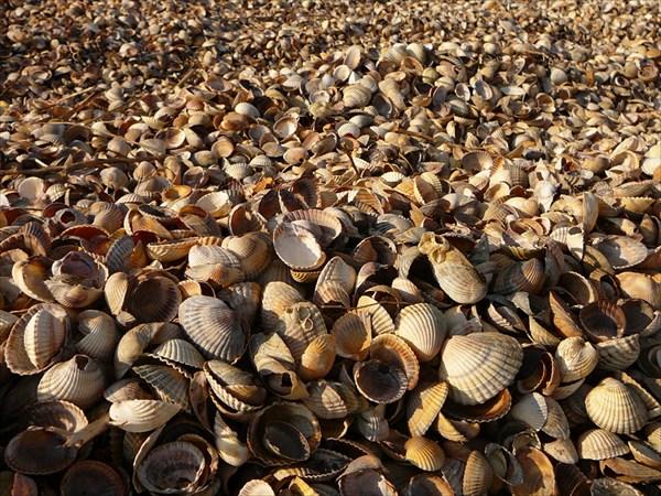 Море ракушек