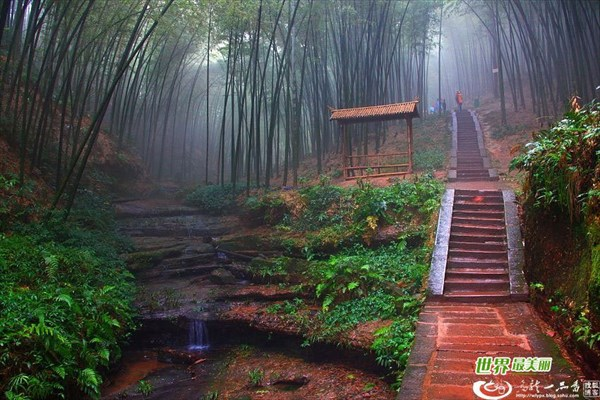 Bamboo_Forest_Shunan