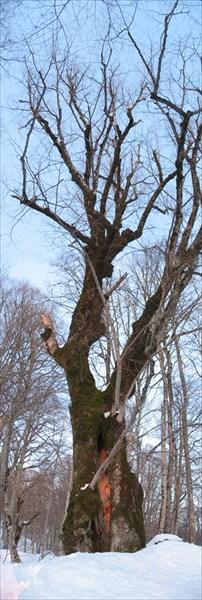 дерево2