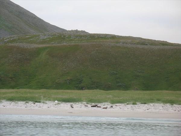 Большая песчаная бухта за мысом Нордкин