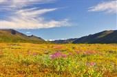 Долина реки Борынджа.  Иван-чай