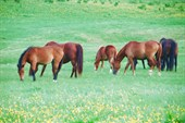 И еще лошадки