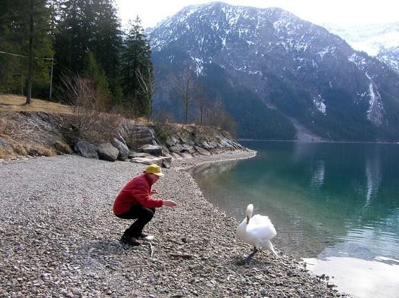 Лебеди шипят