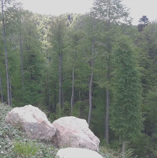 Камни и пустота