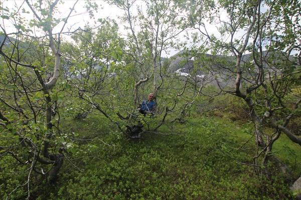 Карликовый лес по дороге к перевалу Петрелиуса