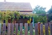 А за забором виноград
