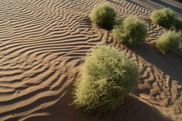 Пески Кызылкумов
