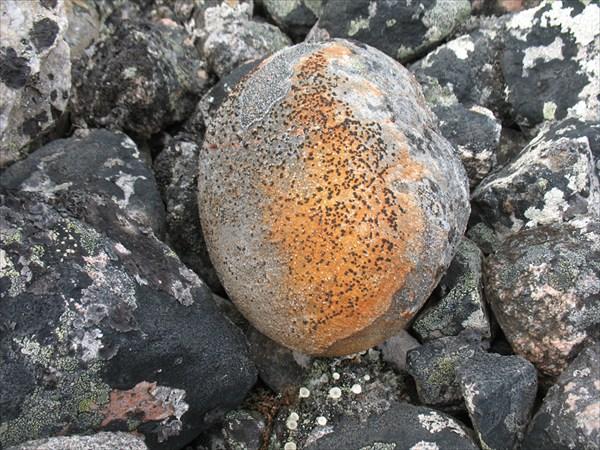 Камни и лишайники