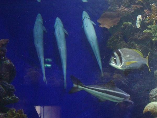134-Рыбы