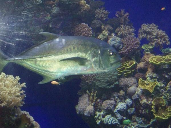 135-Рыба