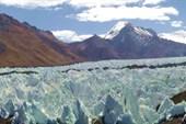 Лес Кальгаспоров на леднике Сингхи