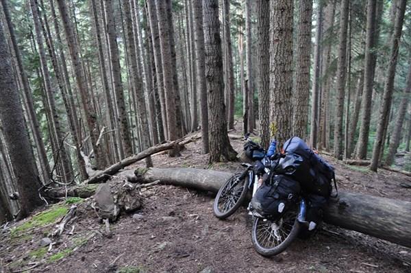 Через лес по очень крутой тропе спускаемся к Нижнему Архызу.