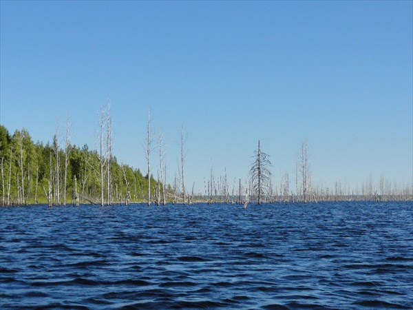 Кемь, затопленный лес